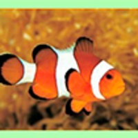 Clownfish for Skype icon