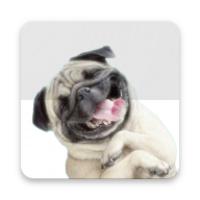 Stickers Pugs