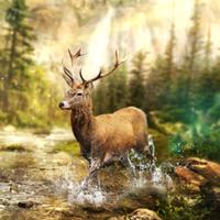Hunting Clash icon