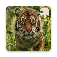 Rompecabezas de Tigres