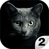 Find a cat 2 android app icon