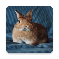 pictures and wallpapers of the rabbit 4k