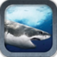 Great White Shark android app icon