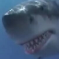 Shark War android app icon