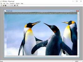 ImageMagick screenshot 4